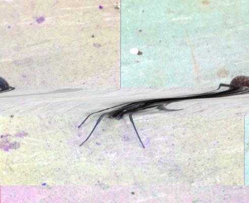 Glitch spider