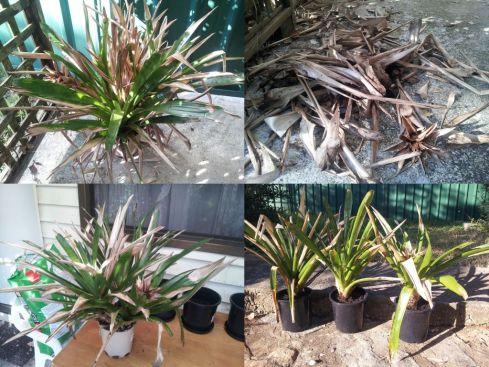 Bromeliads_3