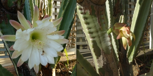 cactus-before-and-after